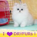 DryFur I LUV